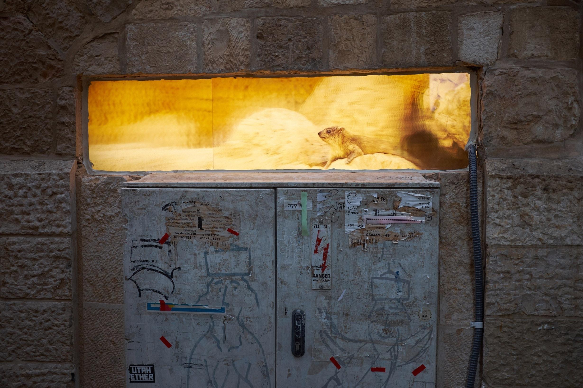 Lenticuar street installation jerusalem