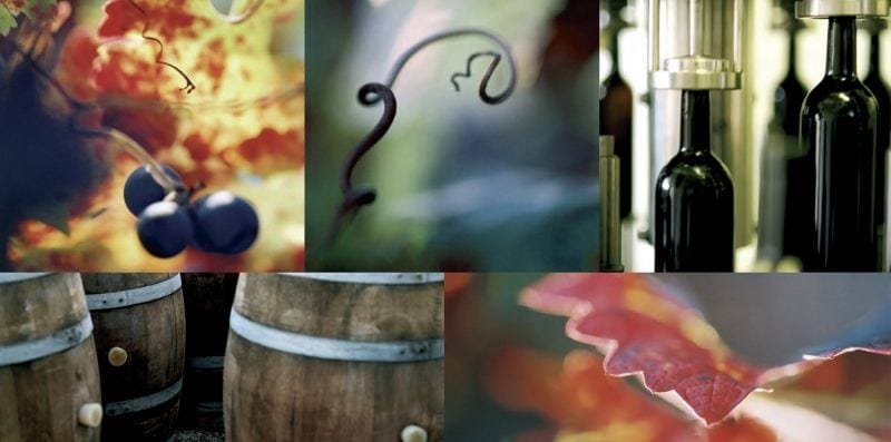 Winery Brochure photography