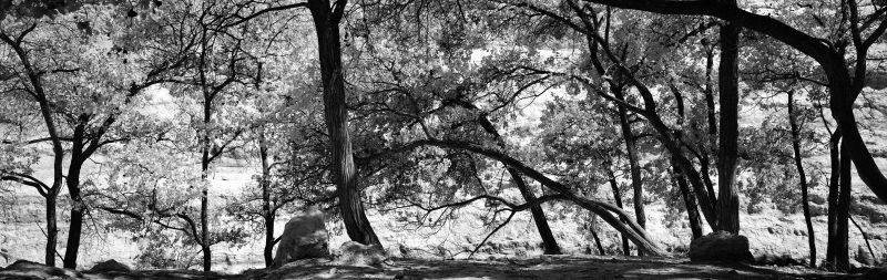 ein avdat trees