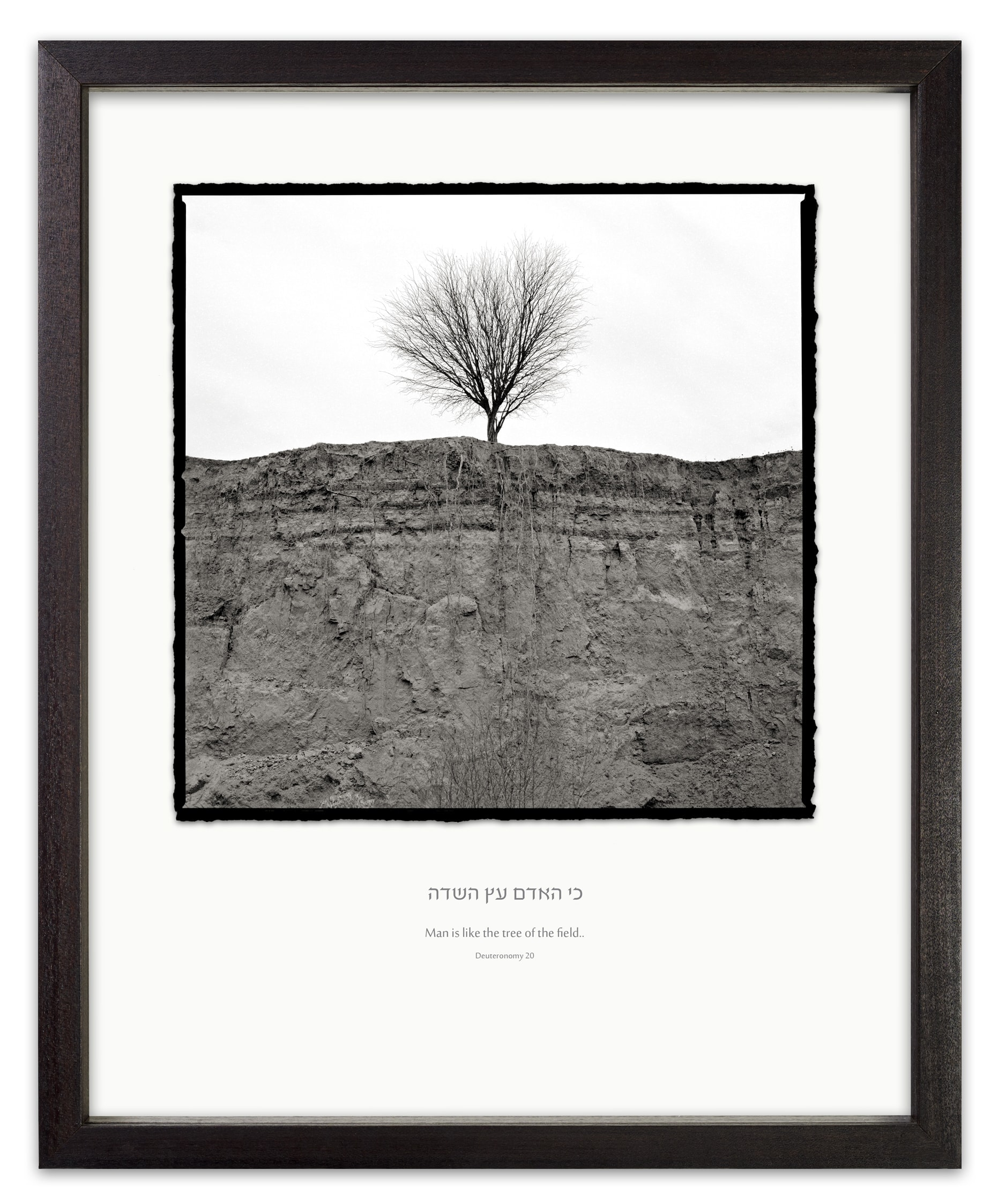 tree of the field