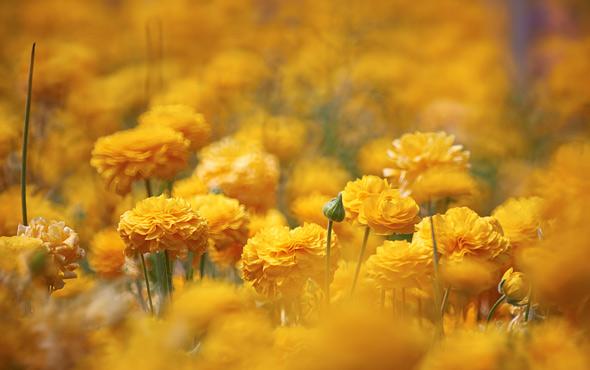 flower-greenhouse